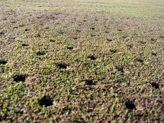 Aeration, Golf Term
