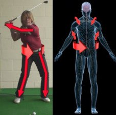 Muscles – Golf Lessons & Tips